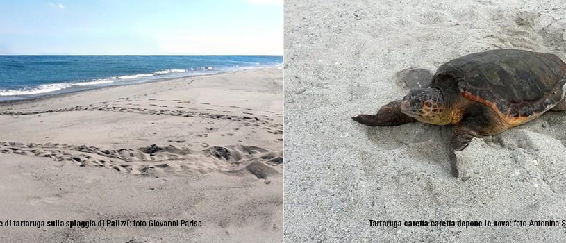 Slide N. 8 - Natura - Spiagge - Tartarughe