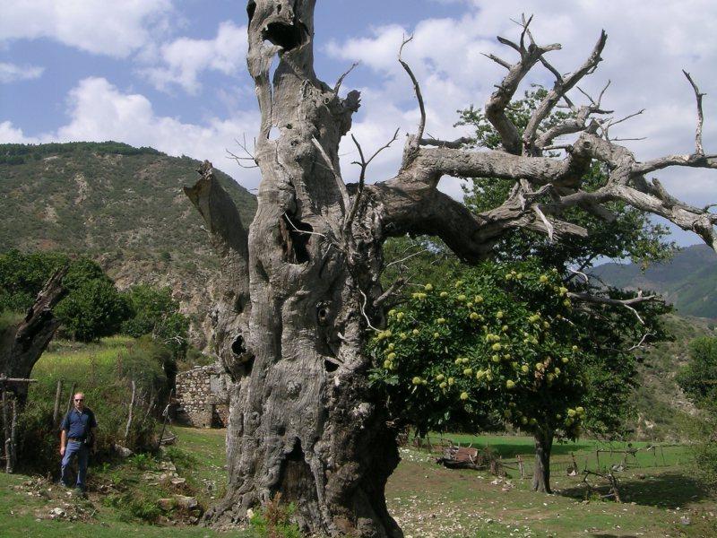 ESCURSIONE da Gallicianò a Grecia